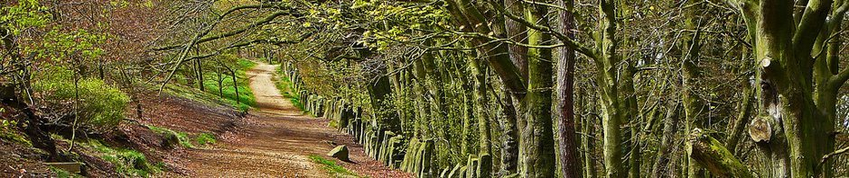creative commons - path in woods